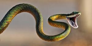 snake revenge
