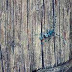 termite control price